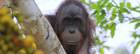 Danum-valley - Borneo Tropical Rainforest Tours - Bellingham Safaris