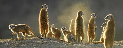 Kalahari Nature Reserve