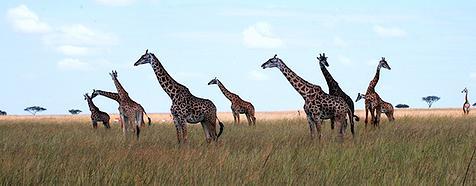 Kenya & Tanzania Luxury Safari Tours - Bellingham Safaris