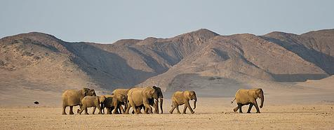 Luxury Namibia Desert Safari Tour - Bellingham Safaris