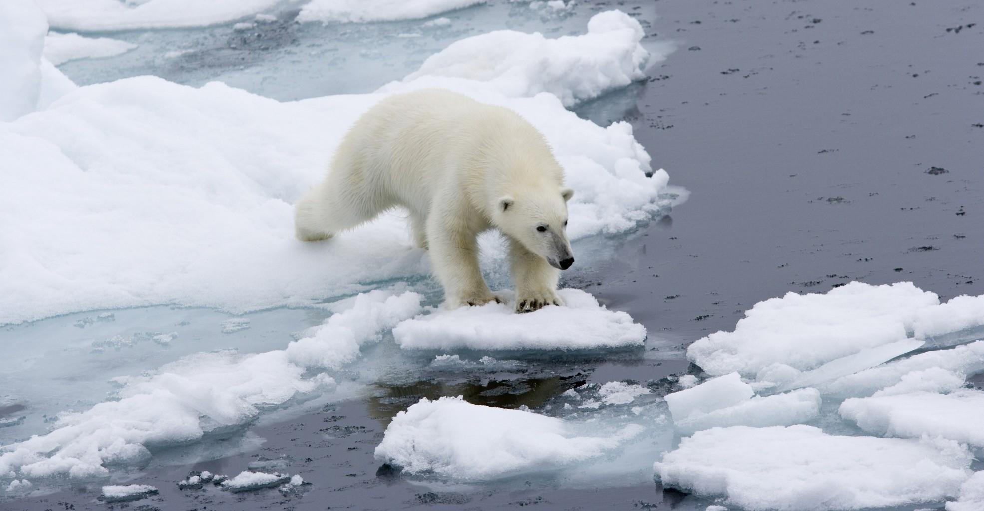 Arctic-Polar-Bear-by-Franco-Banfi-e1439452734671