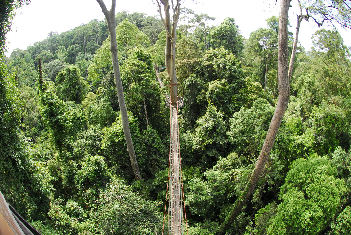Borneo-Danum-Valley-walkway-by-Simon-Bellingham