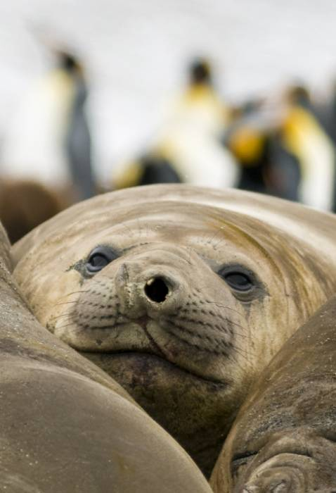 Antarctica - Luxury Safari - Bellingham Safaris