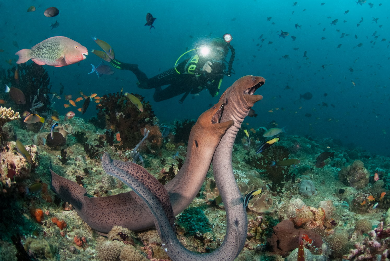 Maldives-Giant-Morays-by-MV-Leo