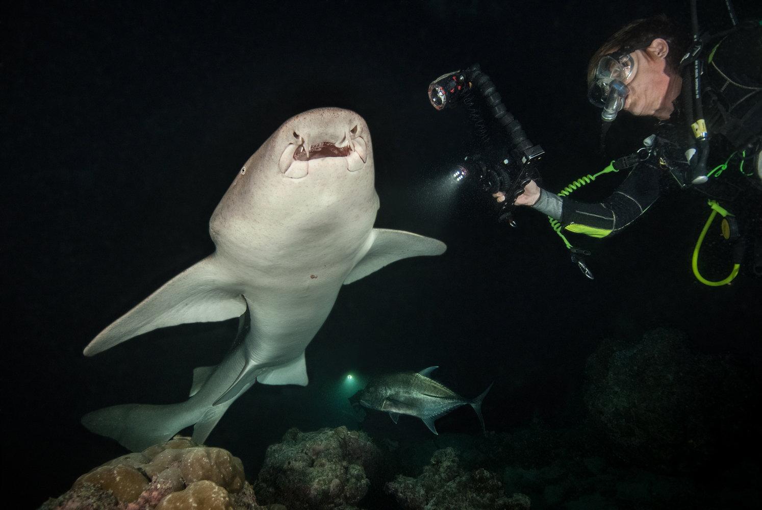 Maldives-Tawny-Nurse-Shark-by-MV-Leo