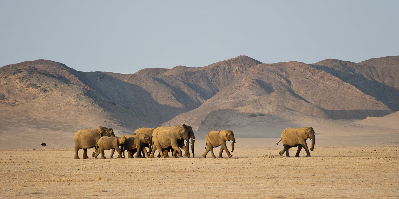 Namibia-Damaraland-Desert-Elephants-by-Olwen-Evans