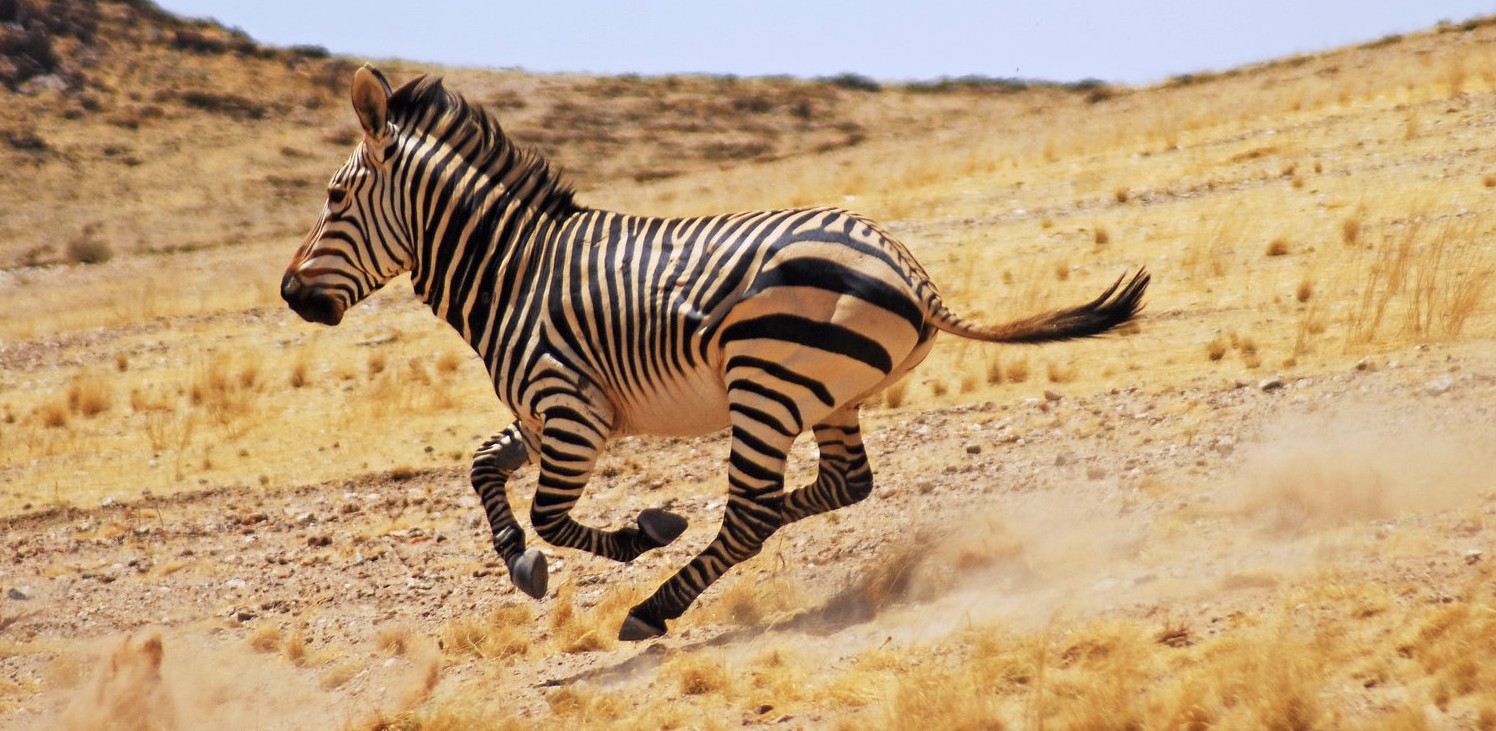 Namibia-Hartmans-Mountain-Zebra-by-Simon-Bellingham-e1439992229513