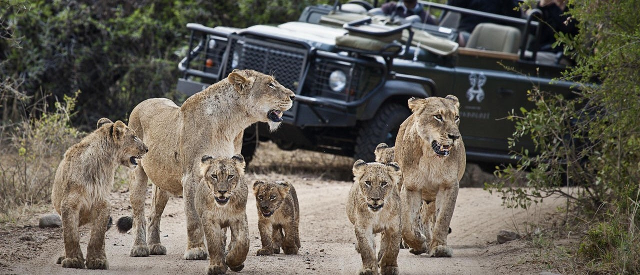 South-Africa-Londolozi-Game-Drive-e1439829749719