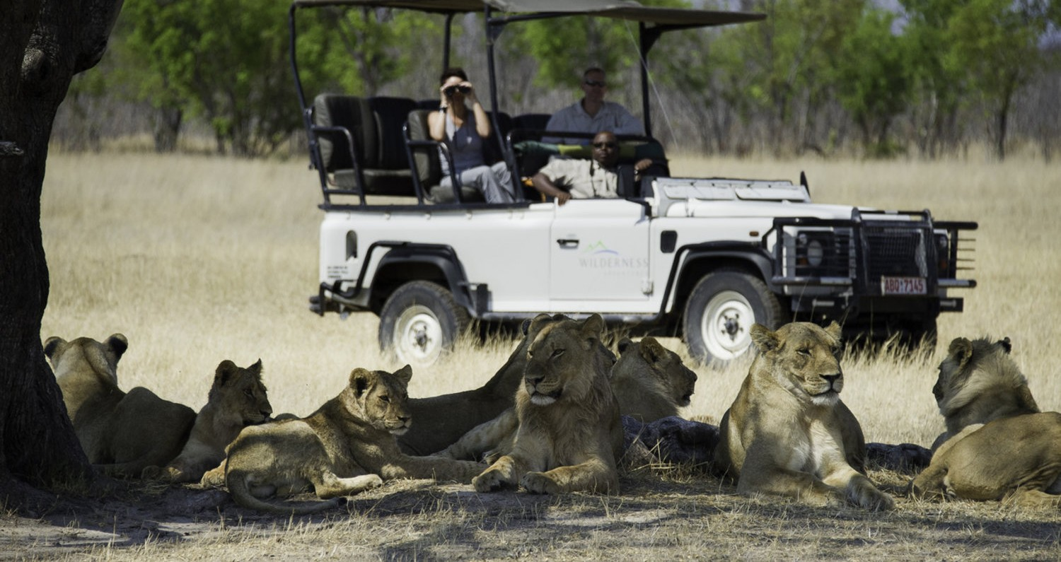 Zimbabwe-Lion-sighting-by-Dana-Allen-e1439628612613