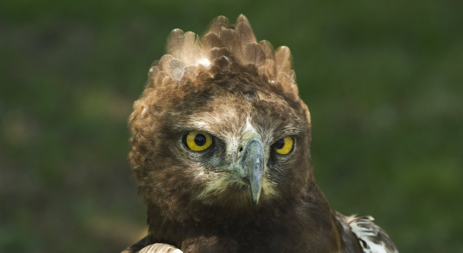Zimbabwe-Martial-Eagle-by-Simon-Bellingham-e1439549846828