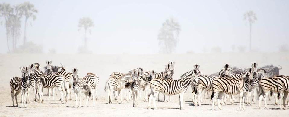 Makgadikgadi National Park (Botswana)