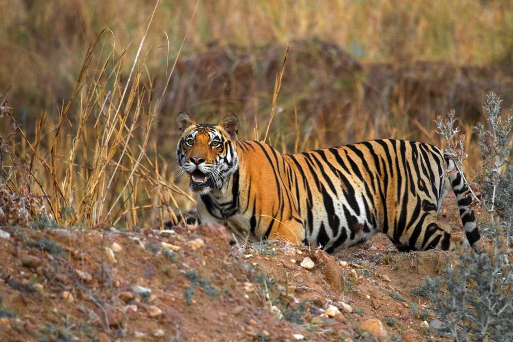 Kanha National Park (India) - July 2017 best tiger reserve