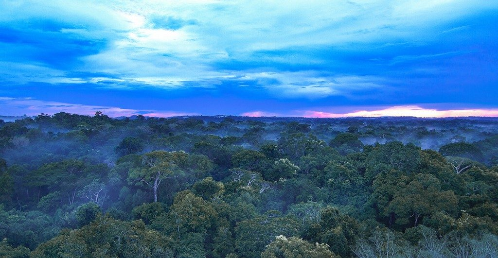Amazon Rainforest Canopy & Riverboat Safari | Bellingham Safaris