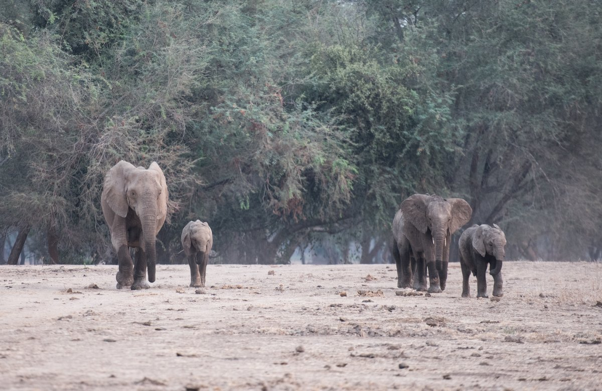 Elephants-by-Simon-Bellingham-001