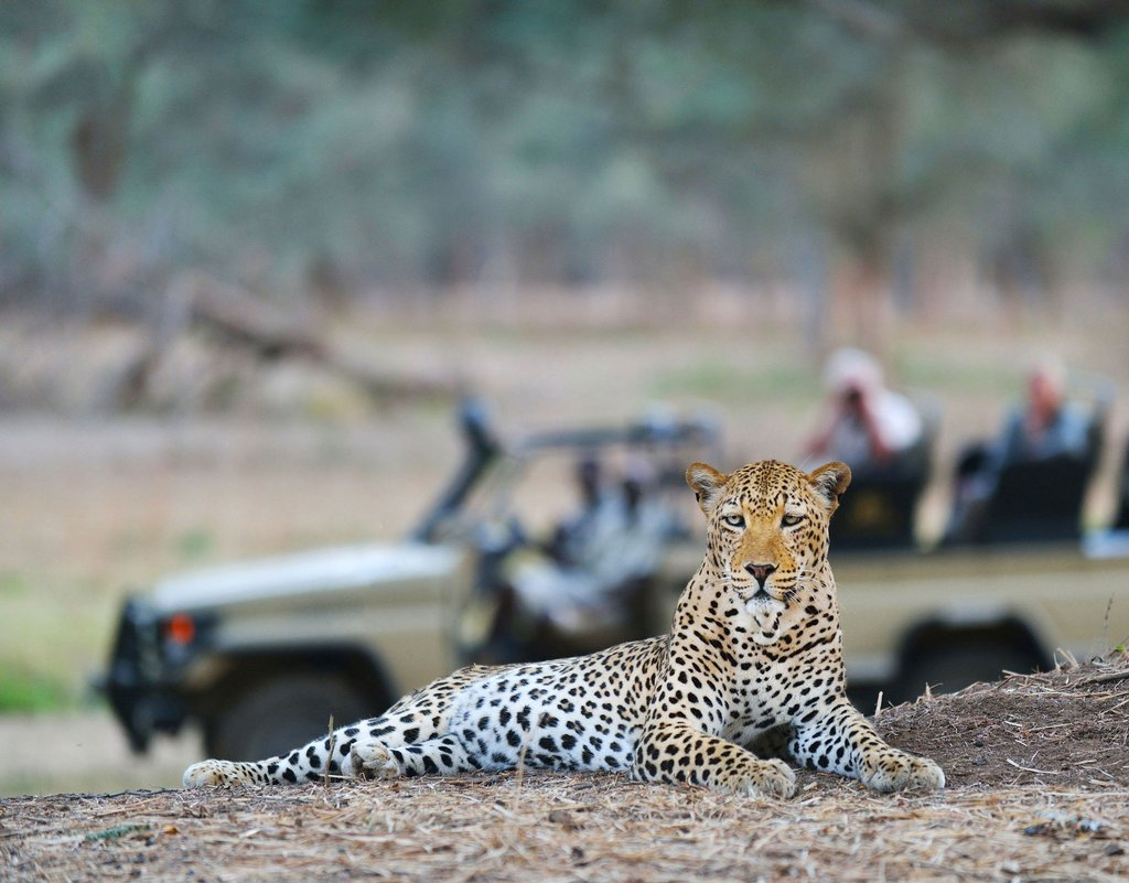 OLD-MONDORO-Leopard-sighting-on-game-drive-2
