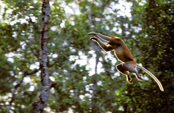 Borneo - View Gallery - Luxury Safaris - Bellingham Safaris