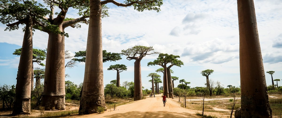 Avenue-of-the-Baobabs-by-Simon-Bellingham-Destination-Banner