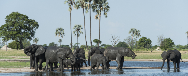 Breeding heard of Elephants by Mike Myers - Zimbabwe & Victoria Falls Luxury Safari - Bellingham Safaris