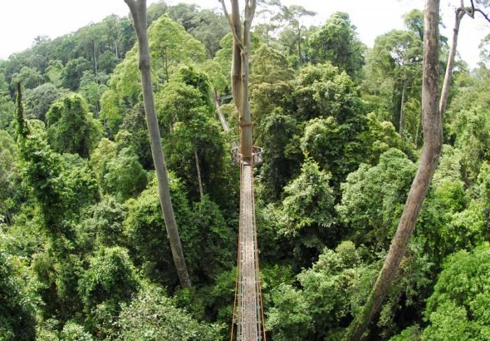 Borneo - Danum Valley walkway by Simon Bellingham
