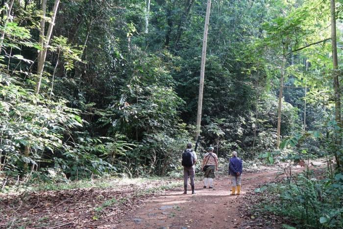 Borneo - Luxury Safari - Bellingham Safaris